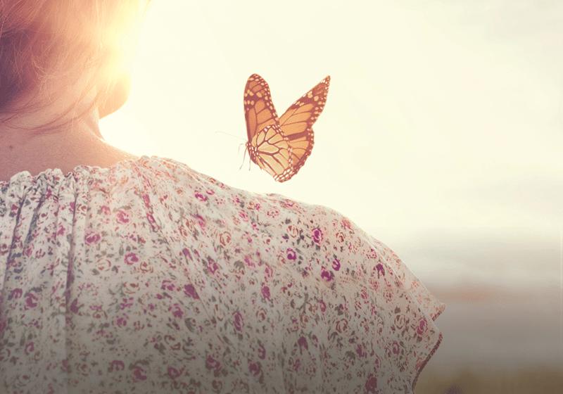 motyl siedzący naramieniu